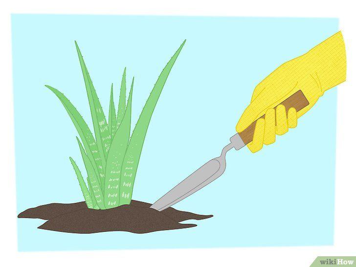 Multiplicați plantele