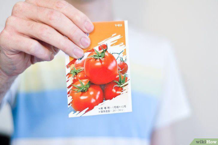 Tomato din semințe
