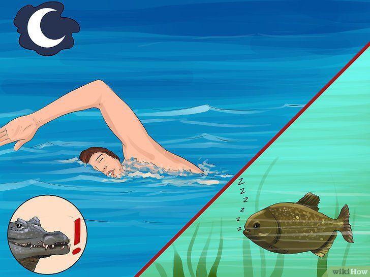 Imaginea intitulată în siguranță în înot cu Piranhas Pasul 3