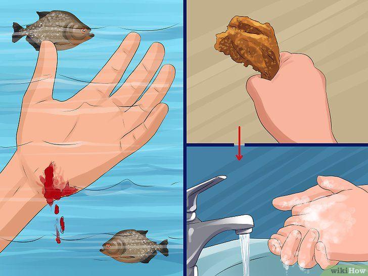 Imagine intitulată În siguranță în înot cu Piranhas Pasul 4