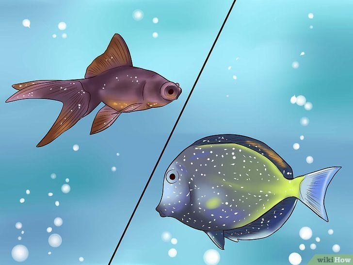 Tratarea bolii cu pete albe în pești ornamentali tropicali