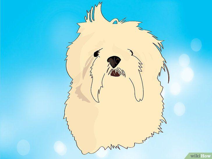 Ce rase de câini sunt în hibridul tău