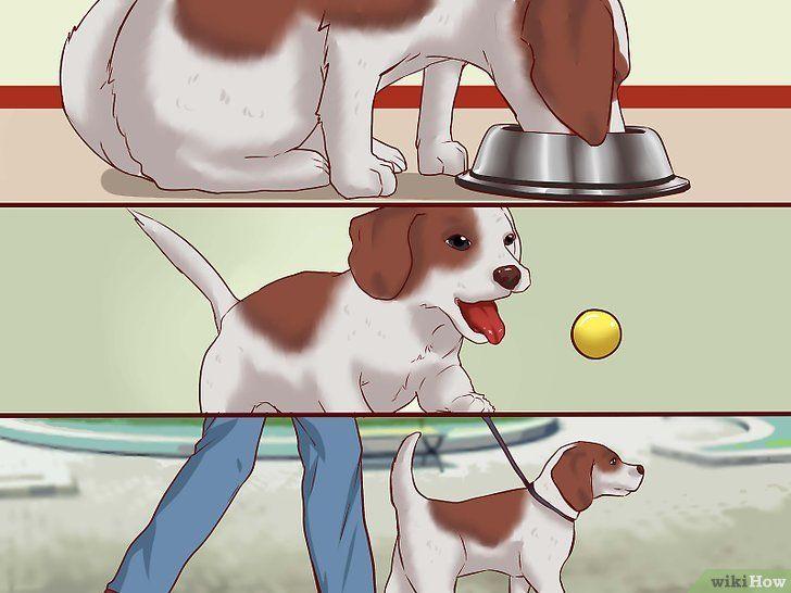 Educarea căței