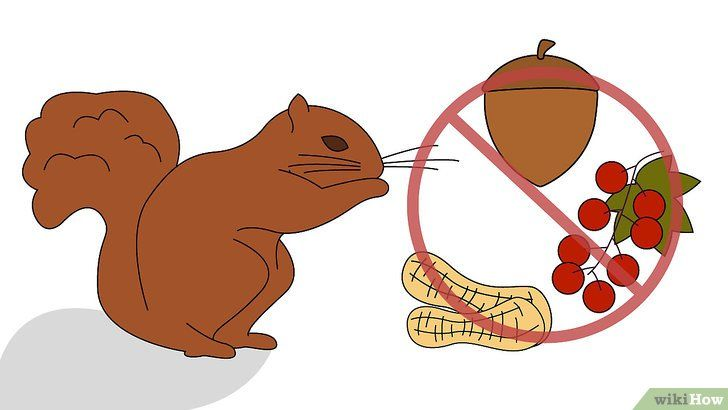 Scapă de veverițe în curtea ta