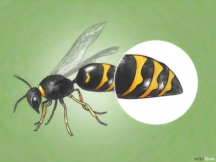 Detectează viespi