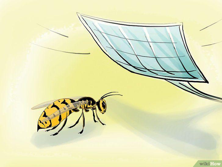 Scapă de viespi