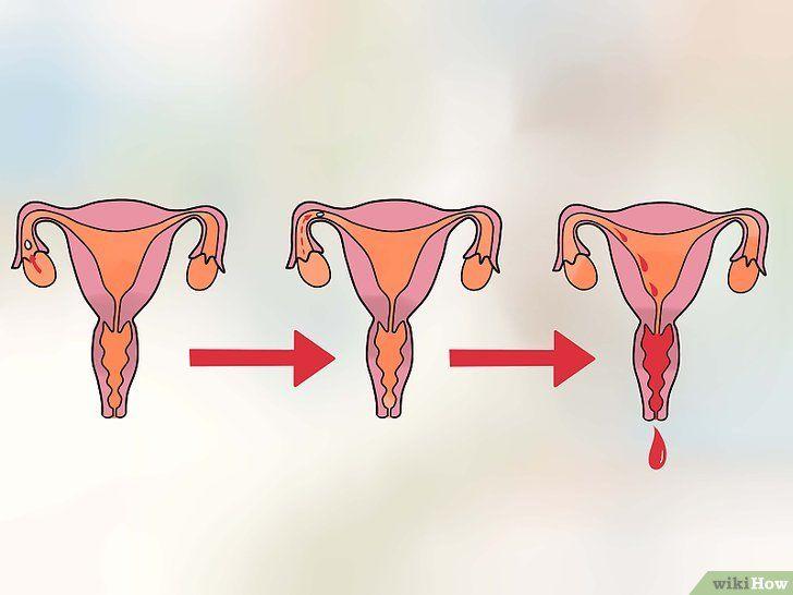 Cum se determină zilele cele mai fertile