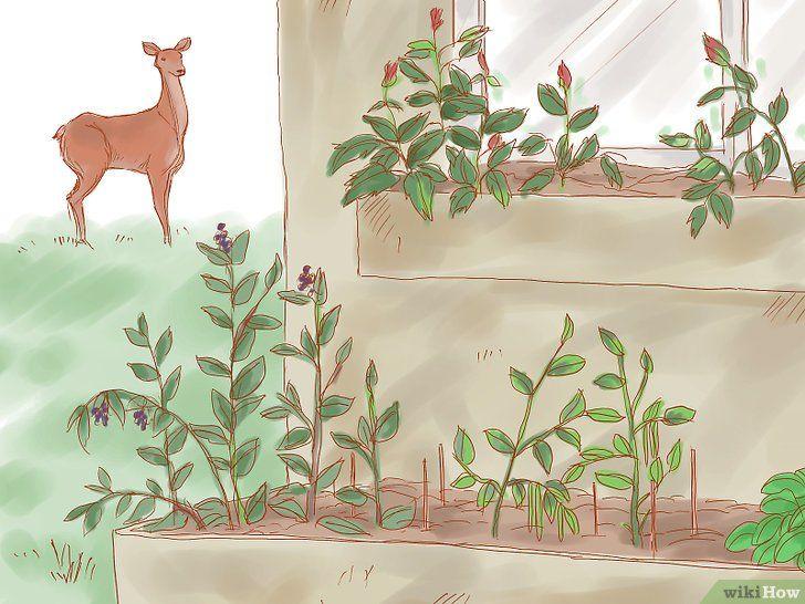 Păstrați animalele sălbatice din grădină
