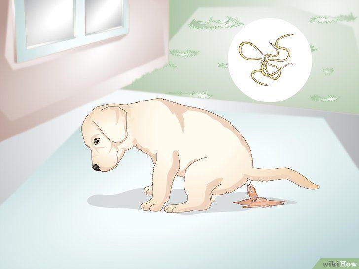Recunoașteți infestarea cu viermi la pui