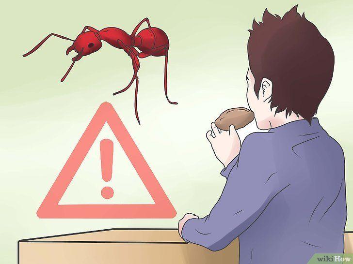 Omoară furnici de zahăr
