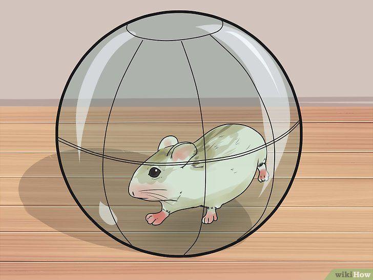 Asigurați-hamsteri, astfel încât acestea să nu mai gnaw pe cușcă