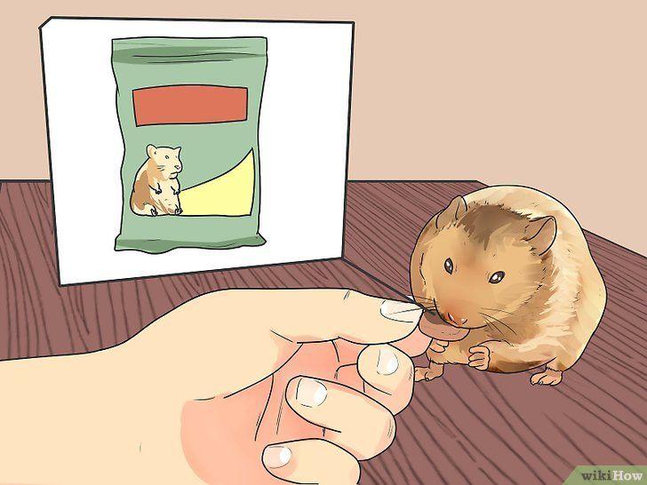 Hrăniți hamsterul